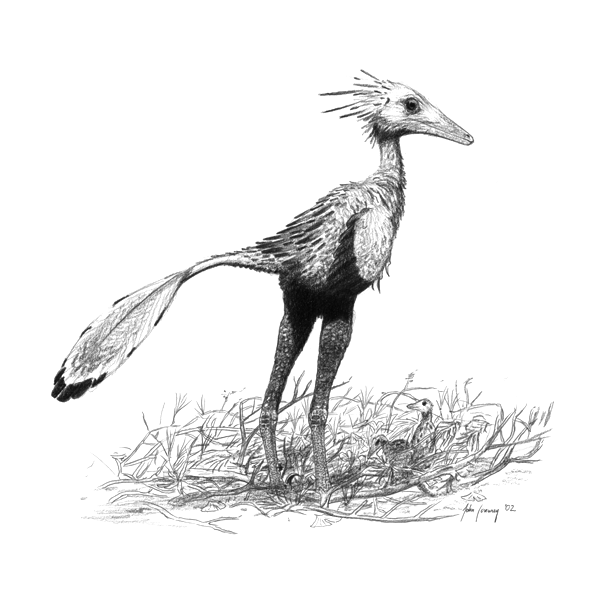 Troodon sapiens - the theropod dinosaur (Sinornithoides youngi)